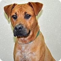 Adopt A Pet :: Popeye - Port Washington, NY