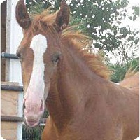 Adopt A Pet :: Chrome (needs a name!) - Dewey, IL