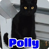 Domestic Shorthair Cat for adoption in Lawrenceburg, Kentucky - #57-3676 Polly - fostered /sponsored GB