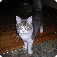 Adopt A Pet :: Kit - Union, SC