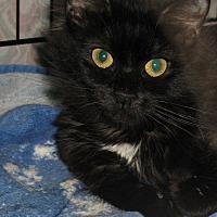 Adopt A Pet :: Hibiscus - Bedford, VA