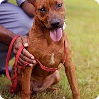 Adopt A Pet :: Jewel - Fort Madison, IA