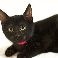 Adopt A Pet :: Gabby - Sioux Falls, SD