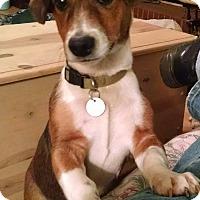 Adopt A Pet :: Cider - Greensboro, GA