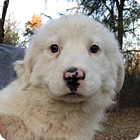 Adopt A Pet :: Bison - SOUTHINGTON, CT