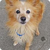 Adopt A Pet :: Jack - Charlottesville, VA