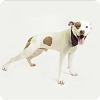 Adopt A Pet :: Petey - Troy, VA