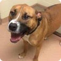 Adopt A Pet :: Diesel 4069 - Columbus, GA