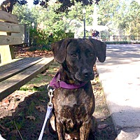 Adopt A Pet :: Dolly - Savannah, GA