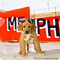 Adopt A Pet :: Memphis - Fayetteville, AR