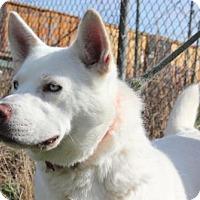 Adopt A Pet :: Joshua - Erwin, TN