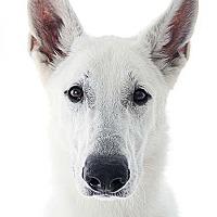Adopt A Pet :: Jax - Mira Loma, CA