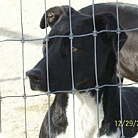Adopt A Pet :: Crystal - Mexia, TX