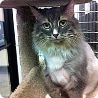 Adopt A Pet :: Niki - Warminster, PA