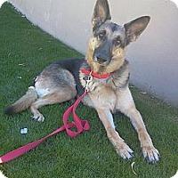 Adopt A Pet :: Milan (courtesy post) - Scottsdale, AZ