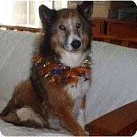 Adopt A Pet :: Kellie - San Diego, CA