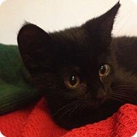 Adopt A Pet :: Ike - Reston, VA