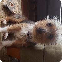 Adopt A Pet :: Nick - Richmond, VA