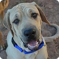 Adopt A Pet :: Oscar - Yakima, WA