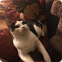 Adopt A Pet :: Charlene - Louisville, KY