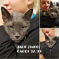 Adopt A Pet :: JACK - Flint, MI