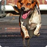 Adopt A Pet :: Duke--RESCUED! - Marlinton, WV