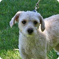 Adopt A Pet :: Mindy - Carlsbad, CA