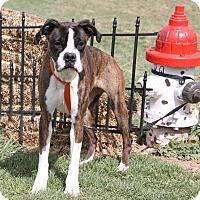Adopt A Pet :: Stella (Spayed) - Marietta, OH
