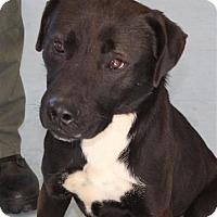 Adopt A Pet :: Sonny - Fairfax Station, VA