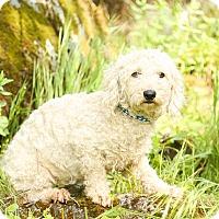 Adopt A Pet :: Jasmine - Auburn, CA