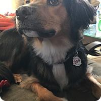 Adopt A Pet :: Boh (COURTESY POST) - Baltimore, MD