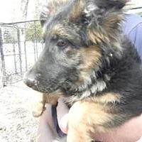 Adopt A Pet :: Heidi - Antioch, IL
