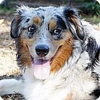 Adopt A Pet :: Madigan - Savannah, GA