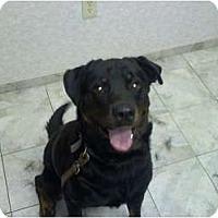 Adopt A Pet :: Grant - Brewster, NY