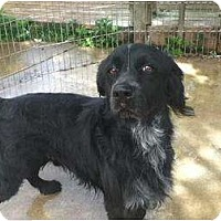 Adopt A Pet :: Blackie - Menomonee Falls, WI