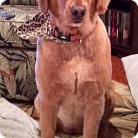 Adopt A Pet :: Bella - Murdock, FL