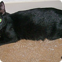 Adopt A Pet :: Nefertiti - Scottsdale, AZ