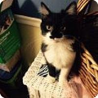 Adopt A Pet :: Nigel - Delmont, PA