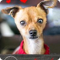 Adopt A Pet :: Bonded- Oscar - Lucknow, ON
