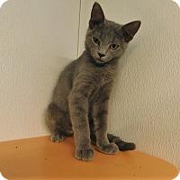 Adopt A Pet :: Noe - Lake Panasoffkee, FL