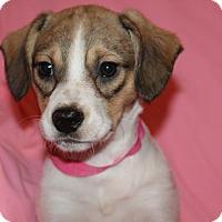 Adopt A Pet :: April - Burlington, VT