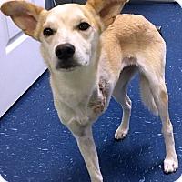Adopt A Pet :: Jersey - Huntsville, AL