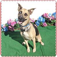Adopt A Pet :: PRINCESS - Marietta, GA