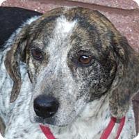 Adopt A Pet :: Samantha - Oxford, MS