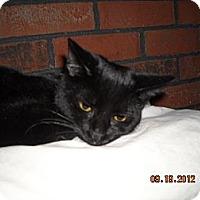 Adopt A Pet :: Dallas - Riverside, RI