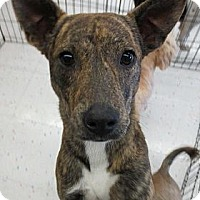 Adopt A Pet :: Lindy - Beaumont, TX