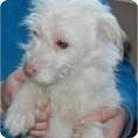 Adopt A Pet :: Sherman - Antioch, IL