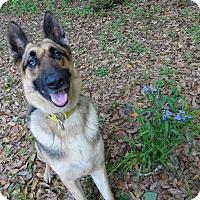 Adopt A Pet :: Columbo - Green Cove Springs, FL