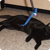 Adopt A Pet :: Jan - Colmar, PA
