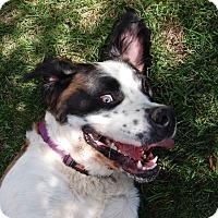 Adopt A Pet :: Sasha - Bellflower, CA